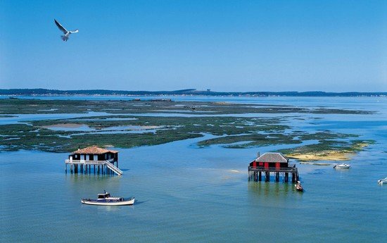 discover the bassin d 39 arcachon by boat hotel le dauphin. Black Bedroom Furniture Sets. Home Design Ideas